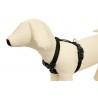 Tropical OVO-VIT