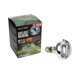 ANIMONDA Carny KITTEN z wołowiną i sercami indyka