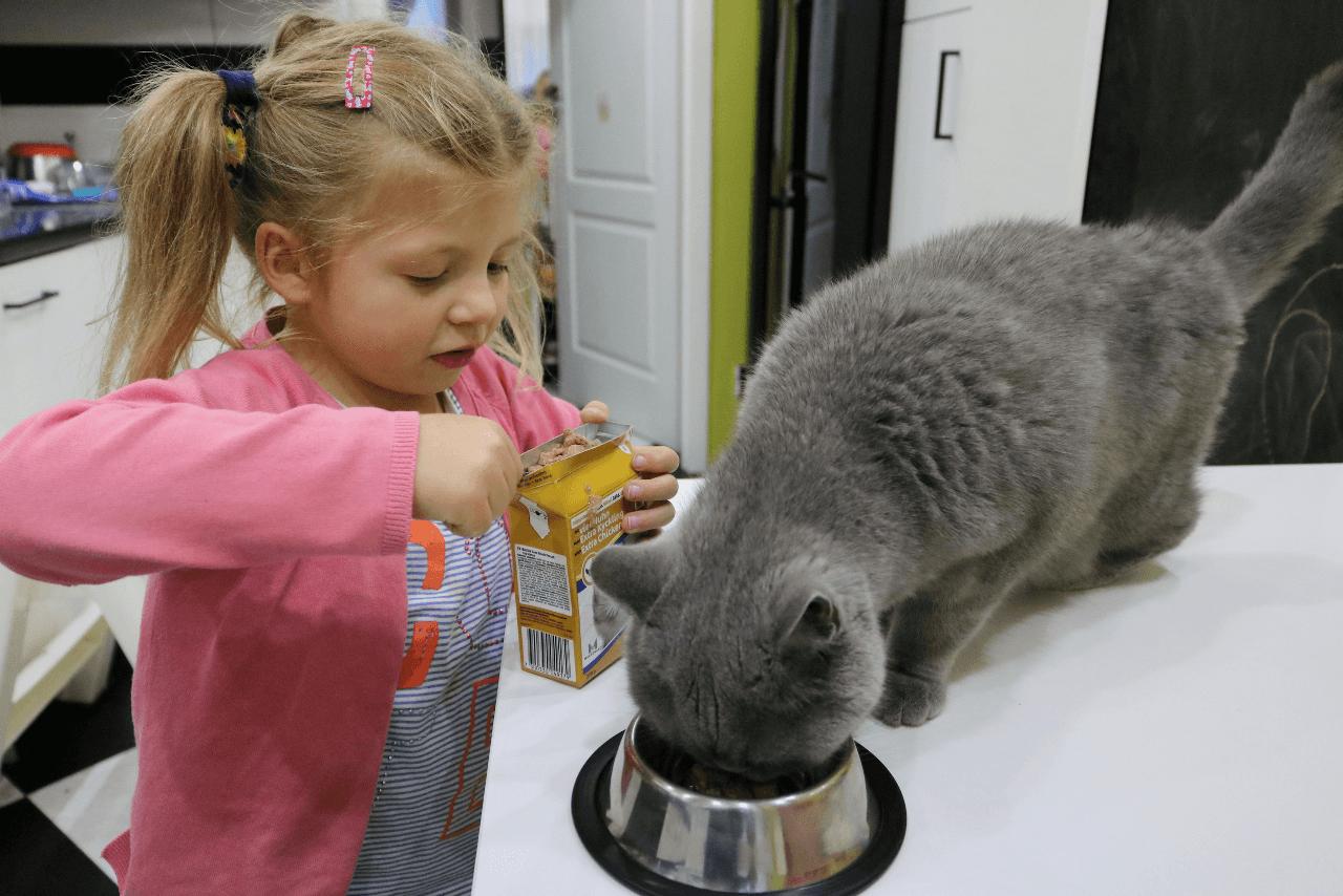 Dziewczynka karmi kota karmą Bozita z kartonika